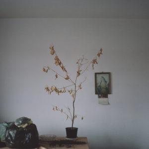 the artistry of dying_marlena jablonska_09